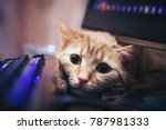 Stock photo ginger cat near the computer keyboard 787981333