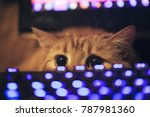 Stock photo ginger cat near the computer keyboard 787981360