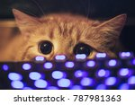 Stock photo ginger cat near the computer keyboard 787981363