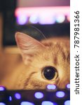 Stock photo ginger cat near the computer keyboard 787981366