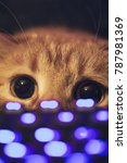 Stock photo ginger cat near the computer keyboard 787981369