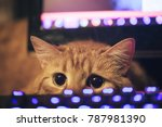 Stock photo ginger cat near the computer keyboard 787981390