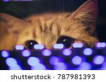 Stock photo ginger cat near the computer keyboard 787981393