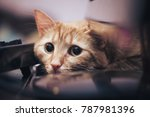Stock photo ginger cat near the computer keyboard 787981396