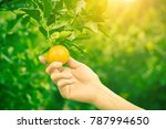 close up woman hand holding... | Shutterstock . vector #787994650