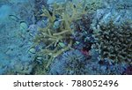 coral and fishes   Shutterstock . vector #788052496