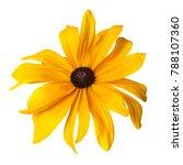 yellow rudbeckia flower... | Shutterstock . vector #788107360