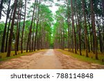 beautiful pine trees forest and ... | Shutterstock . vector #788114848