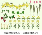 mimosa flowers and spring plant ...   Shutterstock .eps vector #788128564