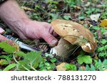 the search for mushrooms in the ... | Shutterstock . vector #788131270