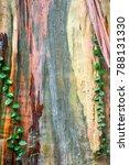 Close Up Of Ivy Climbing Tree...