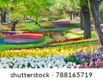 Colorful Tulips In Full Bloom...