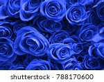 background of many blue roses.... | Shutterstock . vector #788170600