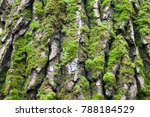 Tree Bark Covered With Moss