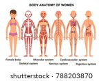 anatomy of the female body.... | Shutterstock . vector #788203870