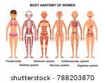 anatomy of the female body.... | Shutterstock . vector #788203870