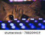 Stock photo ginger cat near the computer keyboard 788204419