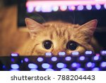 Stock photo ginger cat near the computer keyboard 788204443