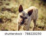 A Dog Looking Like A Hyena...
