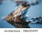 Frog And Frogspawn In A Pond I...