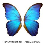 Stock photo wings of a butterfly morpho morpho butterfly wings isolated on a white background 788265403