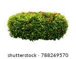 flowers bush tree isolated on... | Shutterstock . vector #788269570