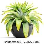 3d illustration tropical plant   Shutterstock . vector #788273188