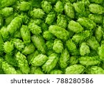 green fresh hop cones for... | Shutterstock . vector #788280586