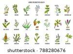 herbs for digestive health.... | Shutterstock .eps vector #788280676