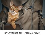 cute light brown cat sitting in ... | Shutterstock . vector #788287024