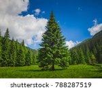 bright summer landscape alone... | Shutterstock . vector #788287519