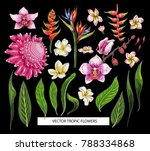 set of tropical flowers. vector ... | Shutterstock .eps vector #788334868
