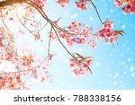 Beautiful Sakura Flower  Cherry ...