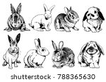 Stock vector graphical set of rabbits isolated on white background vector sketch 788365630