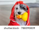 Cute Dog  With Red Towel And...