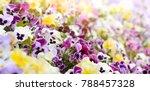 spring viola flowers field... | Shutterstock . vector #788457328