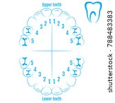 orthodontist human tooth... | Shutterstock .eps vector #788483383