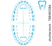 orthodontist human tooth... | Shutterstock .eps vector #788483386