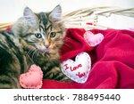 cute brown tabby kitten laying... | Shutterstock . vector #788495440