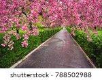 decorative red apple tree...   Shutterstock . vector #788502988