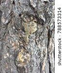 closeup view of a tree trunk | Shutterstock . vector #788573314