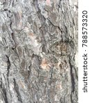 closeup view of a tree trunk | Shutterstock . vector #788573320