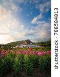 pink flower gardens with hor...   Shutterstock . vector #788584813