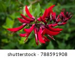 Beautiful Red Flower  Coral...