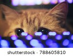 Stock photo ginger cat near the computer keyboard 788605810