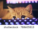 Stock photo ginger cat near the computer keyboard 788605813
