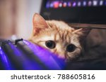 Stock photo ginger cat near the computer keyboard 788605816