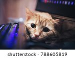Stock photo ginger cat near the computer keyboard 788605819