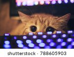 Stock photo ginger cat near the computer keyboard 788605903