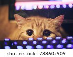 Stock photo ginger cat near the computer keyboard 788605909